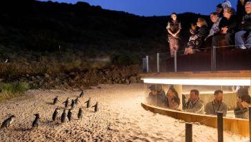 企鹅岛地下&VIP观景位