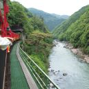 Torokko Arashiyama Train Ticket A Must-See for Cherry Blossoms! On Sale Now