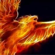 phoenixhzx