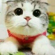 大脸猫_kitty