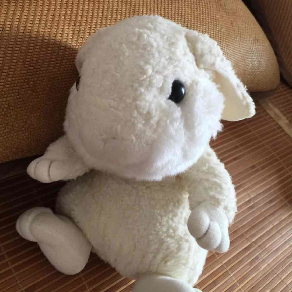 小黄兔子宝
