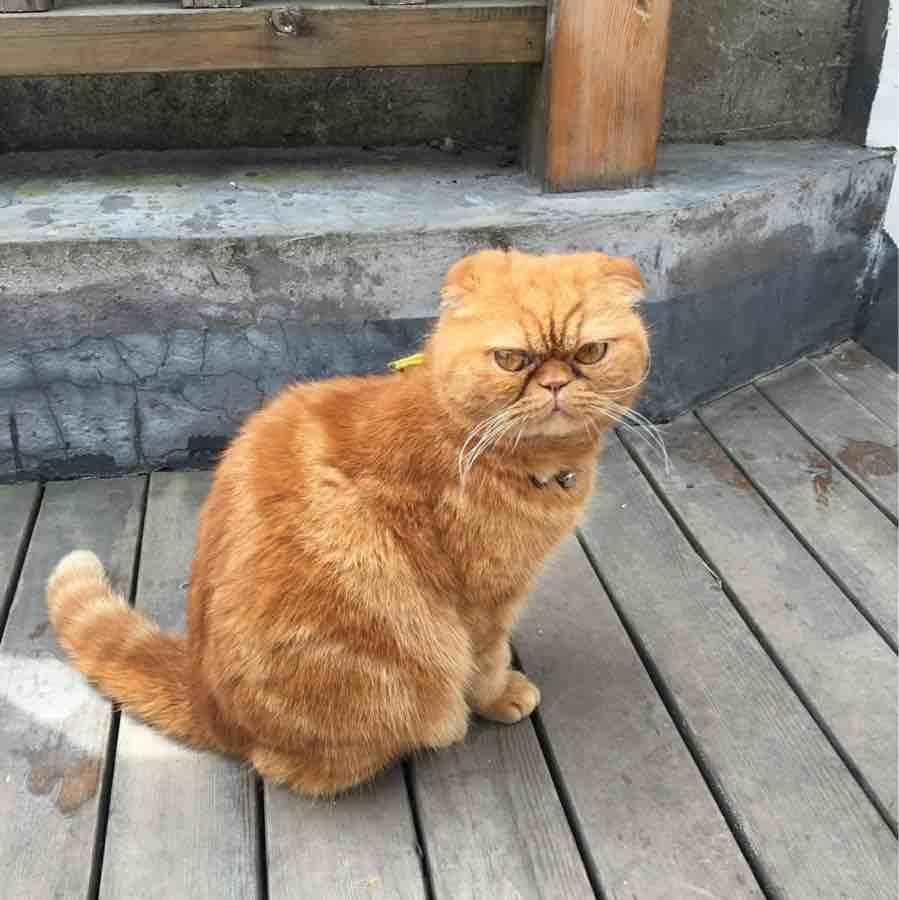 到处游荡的懒猫