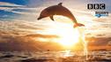 【探索发现·顶奢之选】夏威夷双岛游7天5晚·《BBC探索》专属游船出海 与野生海豚同游+世界十佳观星地 冒纳凯亚雪山+大岛奢华四季酒店+夏威夷火山国家公园游船+波利尼西亚文化中心