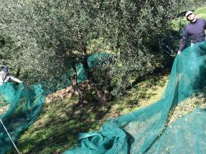 特拉洛薩農家樂(Agriturismo Terrarossa)