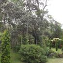 火山蕨森林度假酒店(Volcano Fern Forest Retreat)