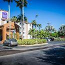 近南佛羅里達大學布什花園好眠酒店(Sleep Inn Near Bush Gardens/USF)