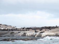 海豹岛-开普敦-尊敬的会员