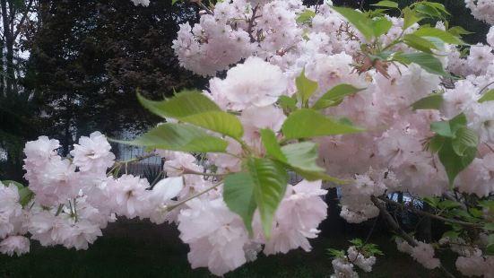 銅川牡丹園