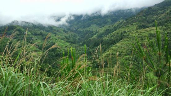 Nongxiang Mountain Forest Park