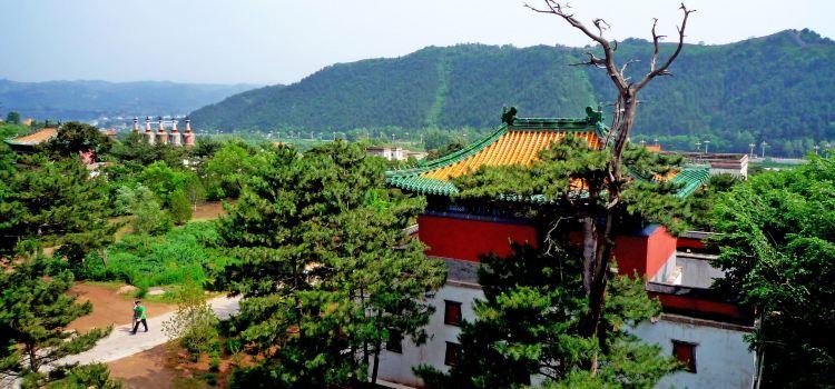 Putuo Zongcheng Temple1