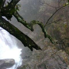 東瀑大峽谷用戶圖片