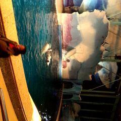 上海長風海洋世界用戶圖片