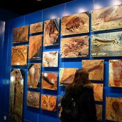 Biologiska Museet User Photo