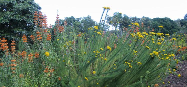 Kirstenbosch Botanical Garden1