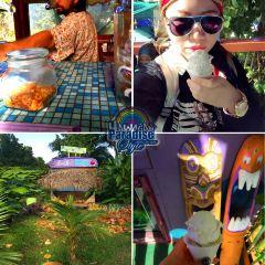 Coconut Glen's用戶圖片