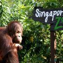 Singapore Zoo Ticket + Tram Ride