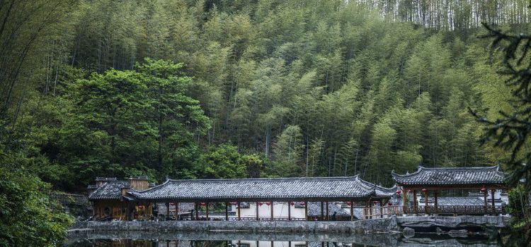 Mukeng Bamboo Sea3