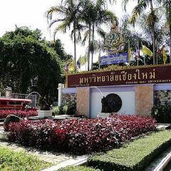 Chiang Mai University Art Museum User Photo