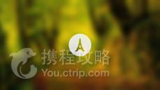玛旁雍错森林公园