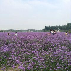 Ziyuan Herb Garden User Photo