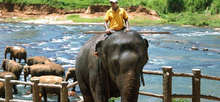 品納維拉大象孤兒院2