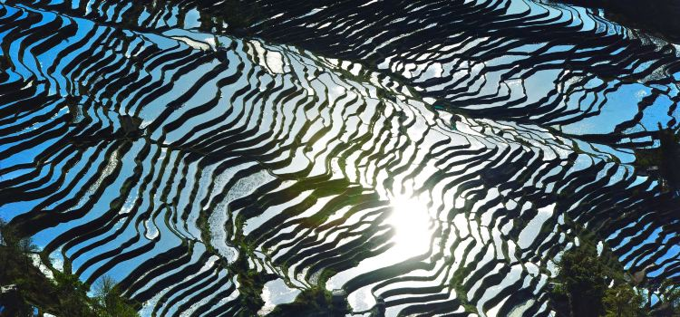 Honghe Hani Rice Terraces2