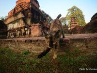 自駕走暹羅,從曼谷到清邁 之 素可泰祕境