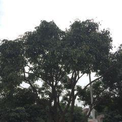 Jingxian Park User Photo