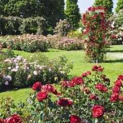 The Rose Garden User Photo