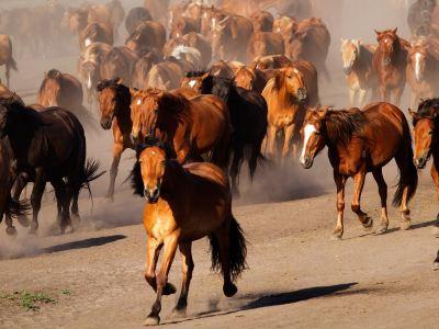 Hongshan Military Horse Farm