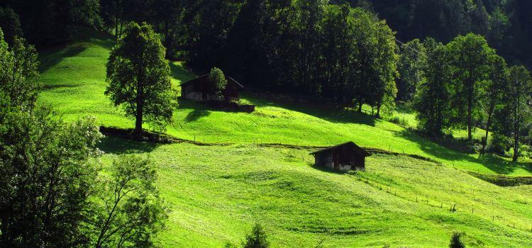 Lucerne3