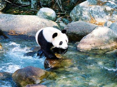 Foping Panda Valley