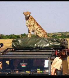 马赛马拉国家公园游记图文-【走进东非——动物王国巡猎记】