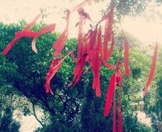 榴花公园-东莞-_CFT01****9873660