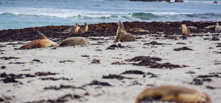 Seal Bay2