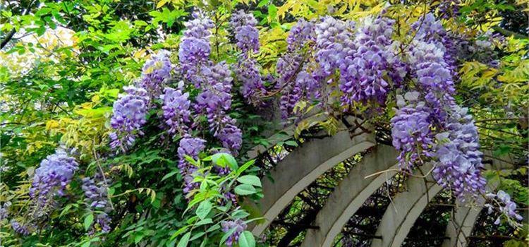 청두 식물원2