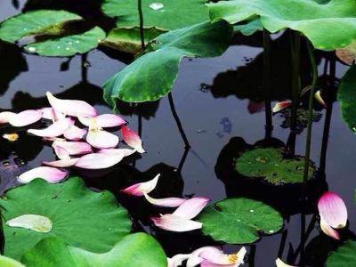 玉環漩門湾湿地公園