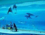 Lianyungang Underwater World User Photo