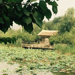 劉禹錫公園用戶圖片