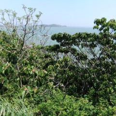東西綠華島用戶圖片