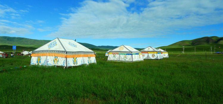 Jinyintan Grasslands2