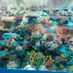 烏魯木齊海洋館用戶圖片