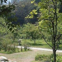 Plum Blossom Valley User Photo
