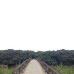 Gualingcun User Photo