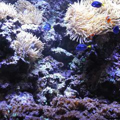 斯堪森水族館用戶圖片