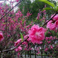Great Flower World User Photo