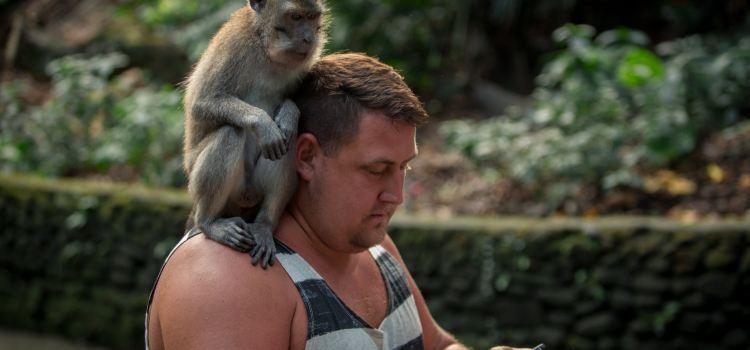 Ubud Monkey Forest3