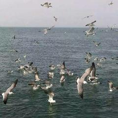 창다오 해상여행 여행 사진