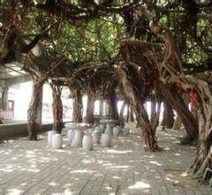 Baisha User Photo