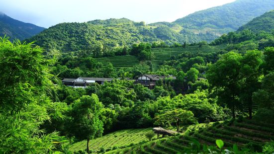 Sanzhou Tea Garden